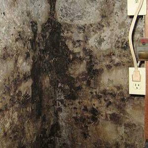 mold-resistant.jpg.560x0_q80_crop-smart