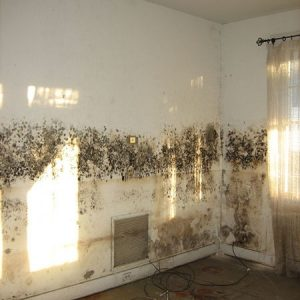 mould-on-a-wall-450x510